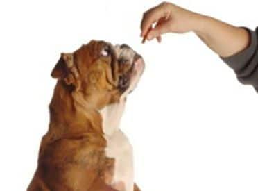 La Bonne Récompense ou Comment remplacer le susucre du chien?